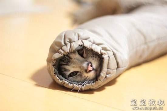 超可爱《袖口猫》冬天冷冷很容易捕获喔(钻)